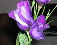Цветочки-c9